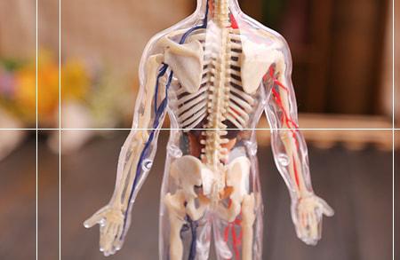 مشاهده محصولات مولاژ و آناتومی